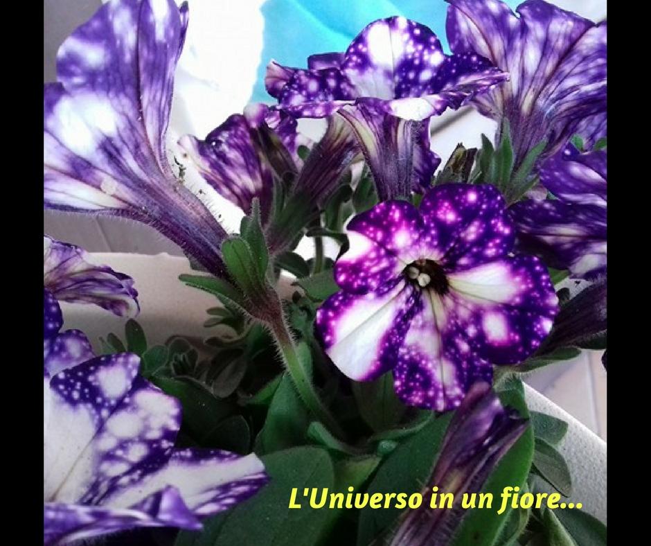 L'Universo in un fiore…